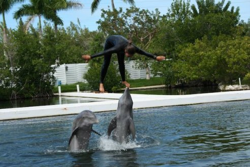 Theater of the Seas - Islamorada - The Florida Keys - mile marker 84.5 - dolphin show - Mark and Chucks Adventures