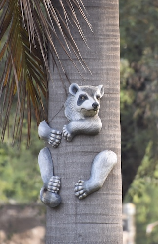 Delhi - India - art - raccoon in trees