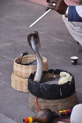 snake charmer - snake charmers of India - snake in a basket - cobra
