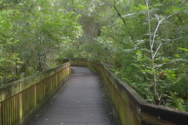 boardwalk at Sawgrass Lake Park