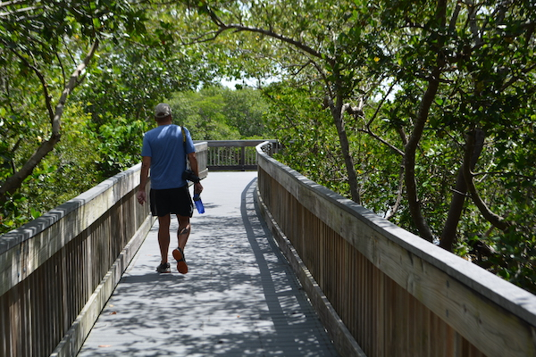 man walking along boardwalk at Weedon Island Preserve in St Pete