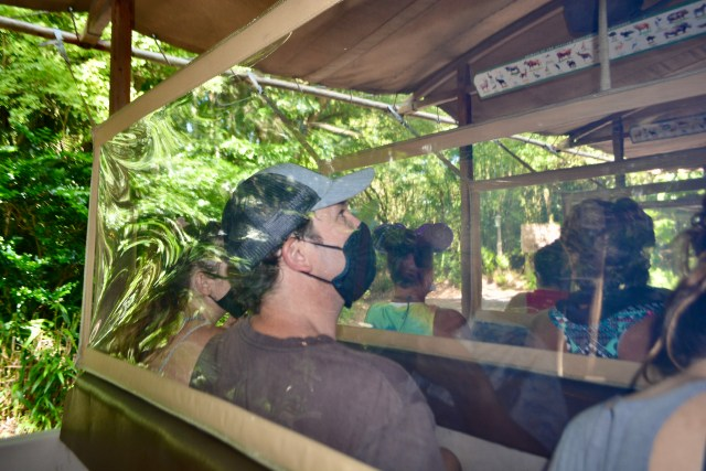acrylic barriers in safari vehicles at Disney's Animal Kingdom