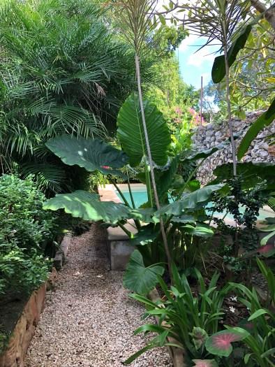 lush backyard garden in our Merida Mexico airbnb