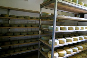 Tolmin Cheese