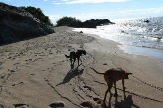 Usisya dogs