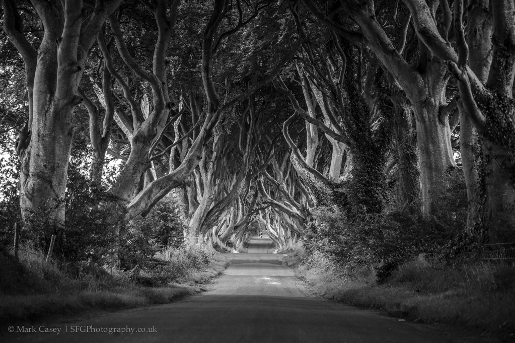 dark-hedges-001.jpg