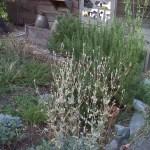 Photo of the drought resistant Garden of Prieto Studios