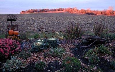 Karen's garden at sunset