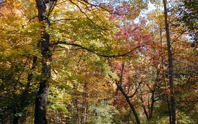 Fall colors at Kettle Moraine—Lapham Peak