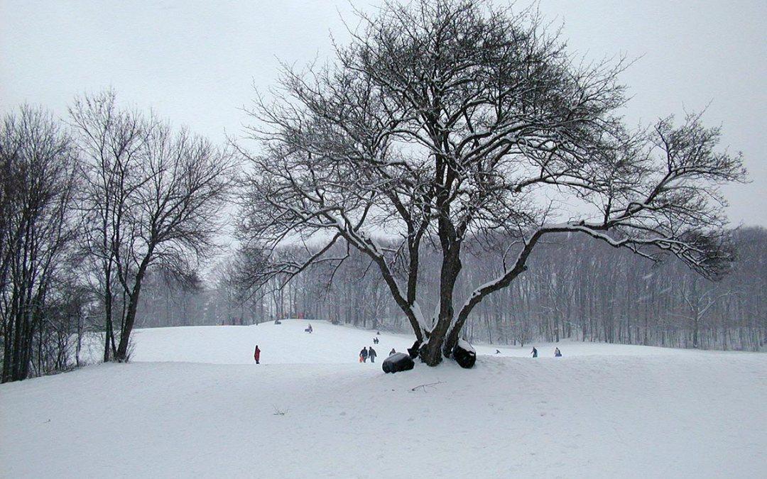 Petrifying Springs sledding area