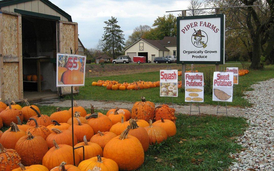 Organic produce: Piper Farms roadside stand, Wisconsin