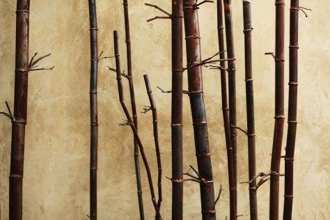 Bamboo #11