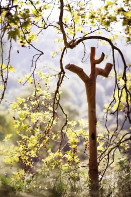 Traveling Tree - Laguna Beach, CA
