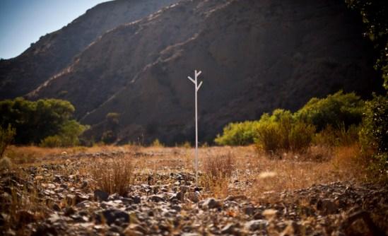 4th tree @ Modjeska Canyon