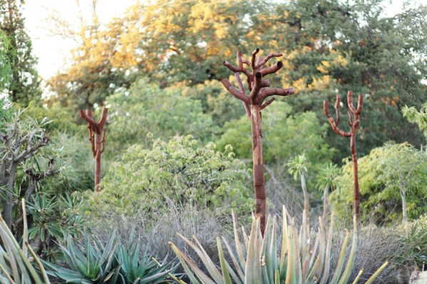 Madagascar Trees - Los Angeles Arboretum