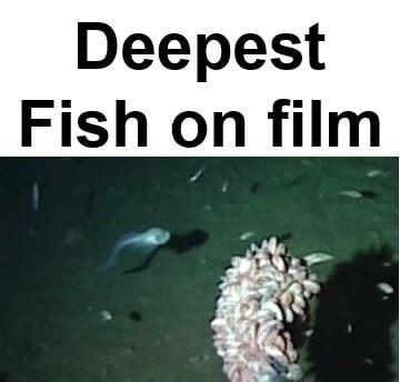 Deepest Fish
