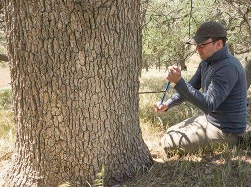 Kevin Anchukaitis tree-ring sample