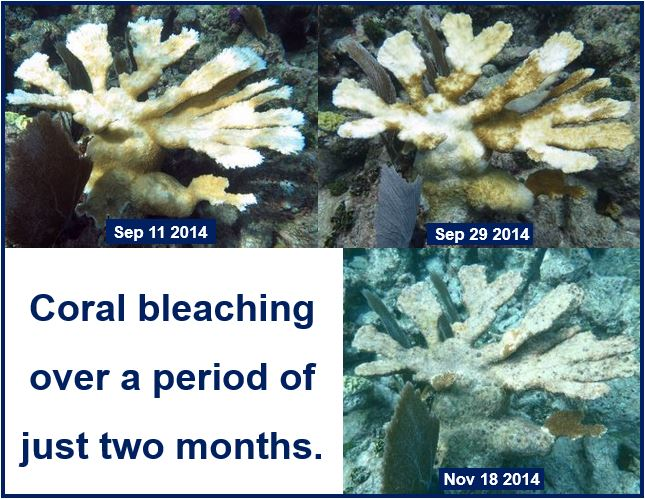 Coral bleaching in two months