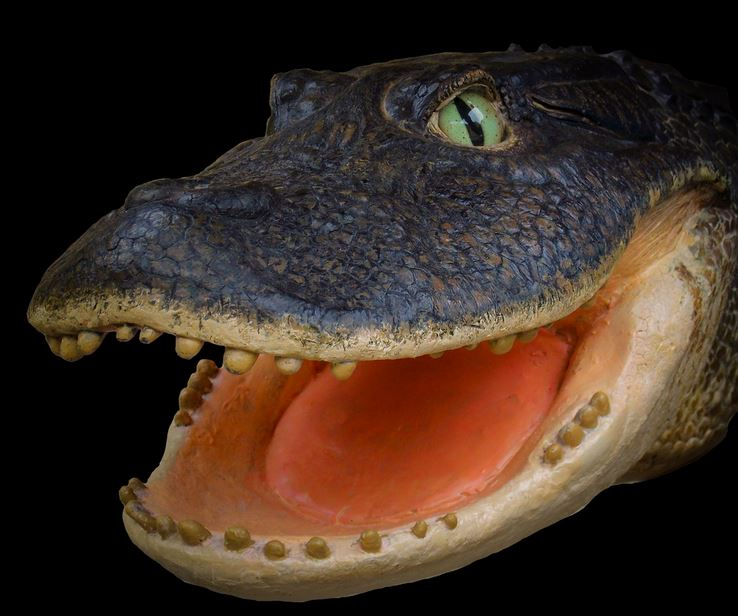 Crocodile Gnatusuchus pebasensis