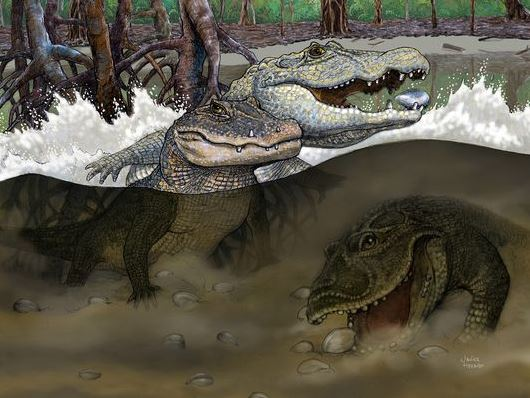 Crocs 13 million years ago