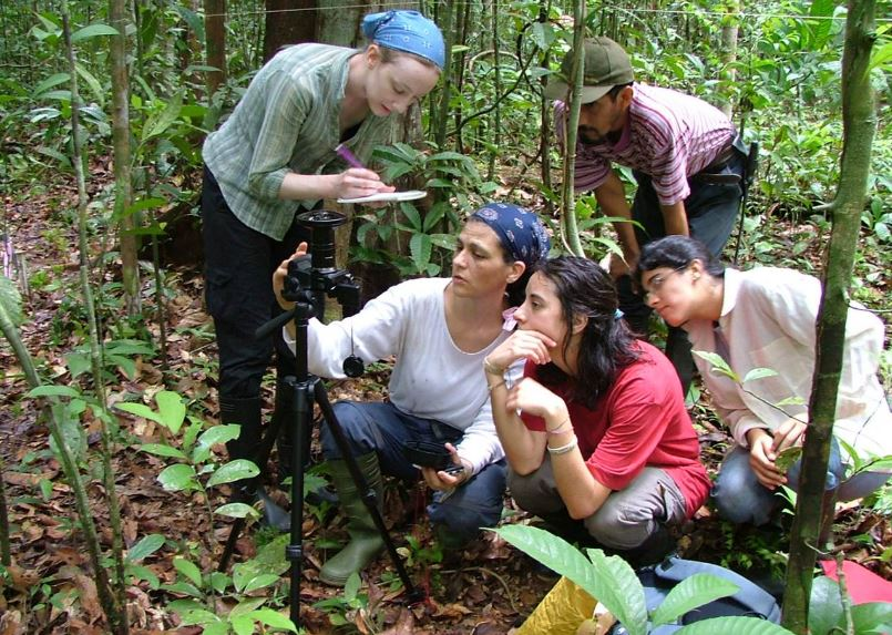 Measuring trees in the Amazon