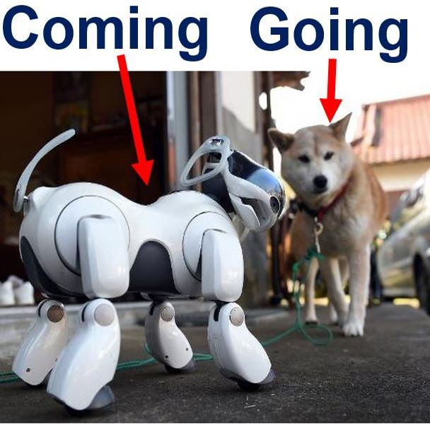 Robopet replacing real animals