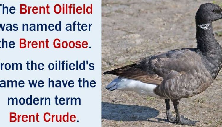Brent Crude - came from the name Brent Goose