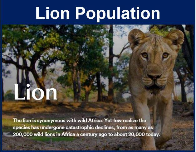 Lion Population