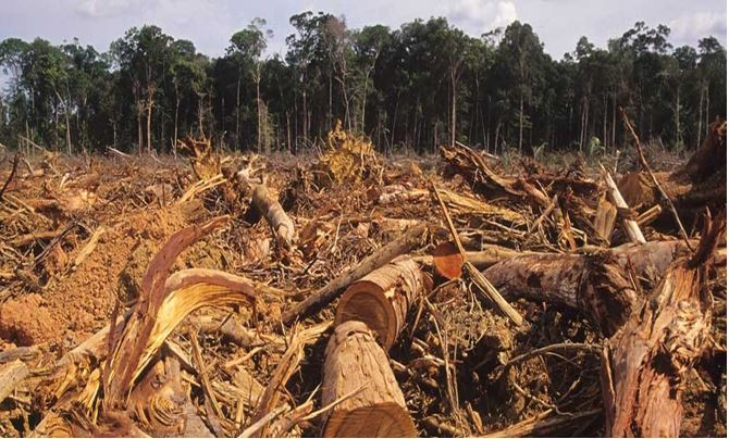 Amazon rainforest deforestation