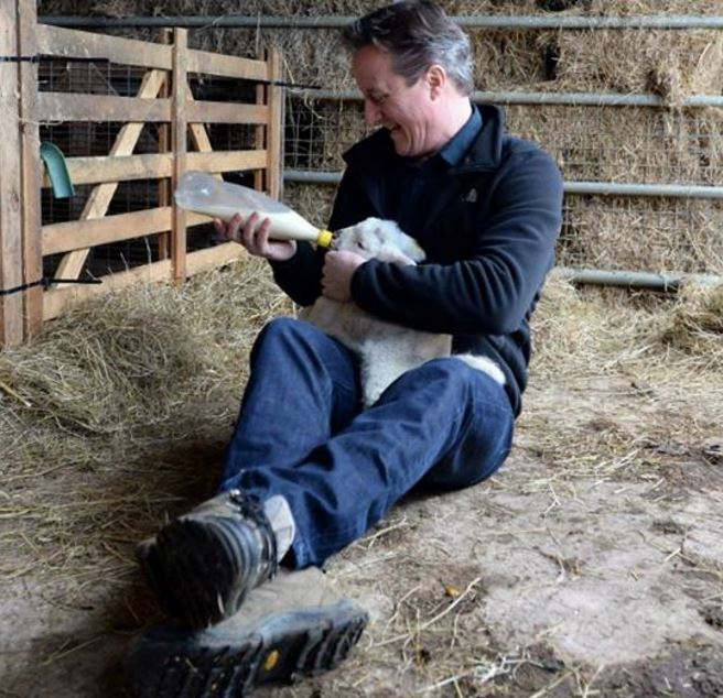 David Cameron feeding a lamb