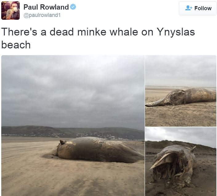 Paul Rowland took a pic of a dead whale washed up on beach in Wales