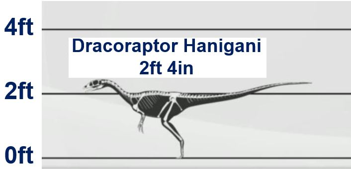 Dracoraptor Hanigani was quite short