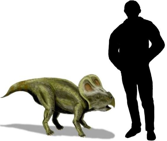 Protoceratops was a relatively small dinosaur.