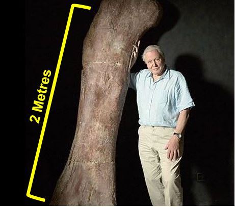 Sir David Attenborough with the giant thigh bone