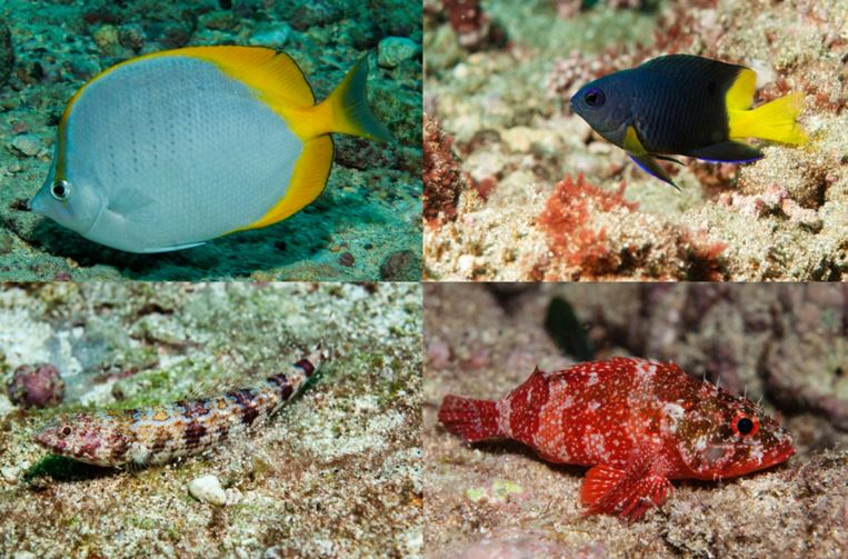Types of fish around Ascension Island