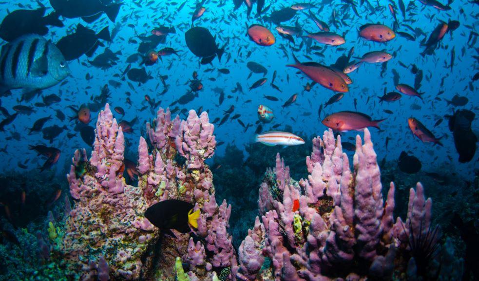 Marine reserve to protect biodiversity
