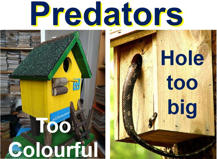 Do not make nest box attract predators