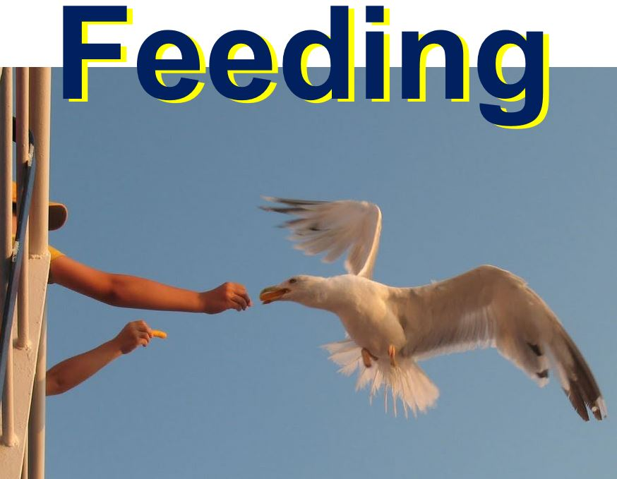 Seagull study by psychologists to see how they interact with