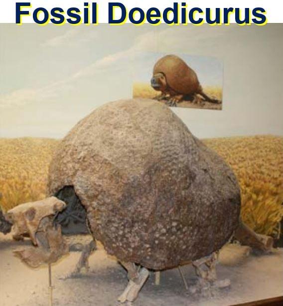 Fossil Doedicurus