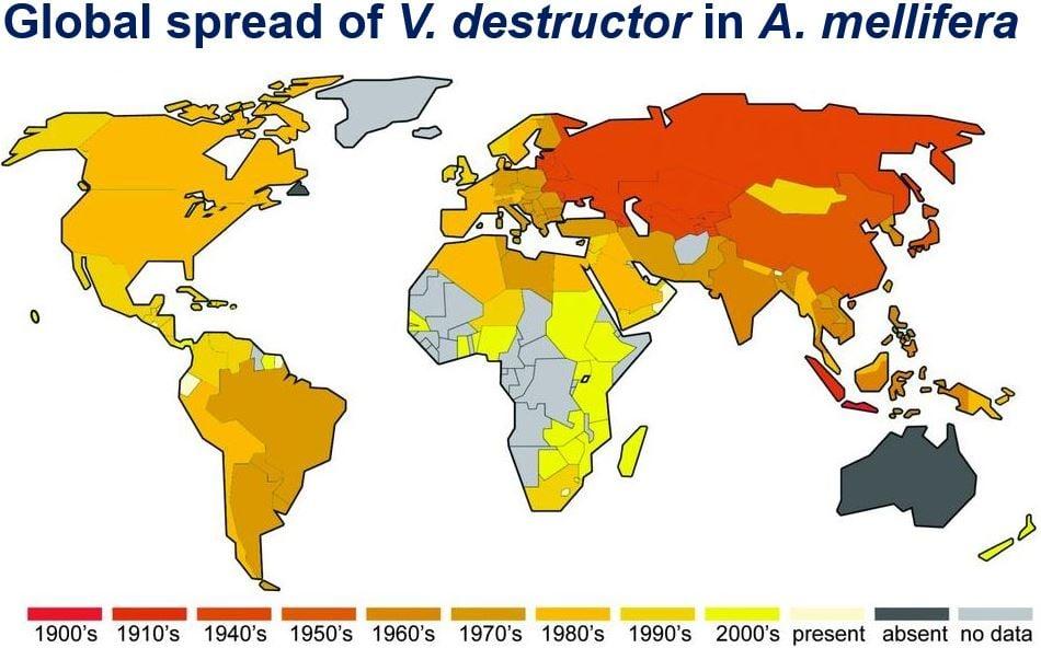 Honeybee Pandemic Global Spread