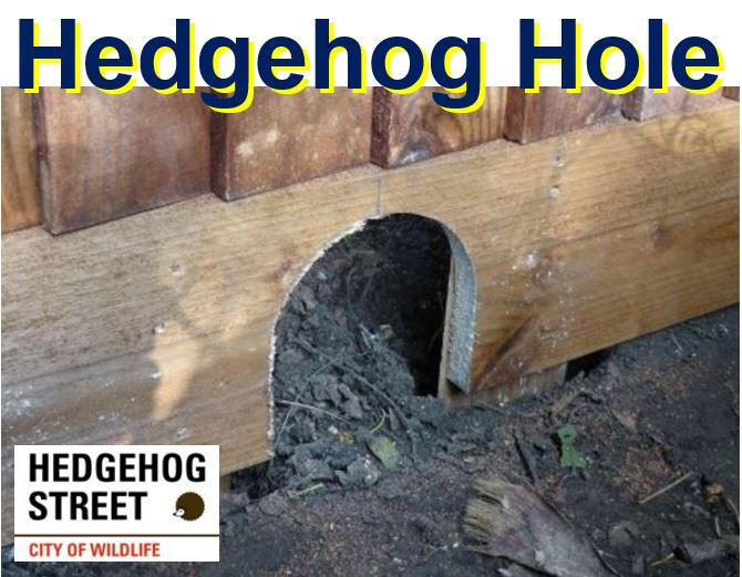 hedgehog hole in fence