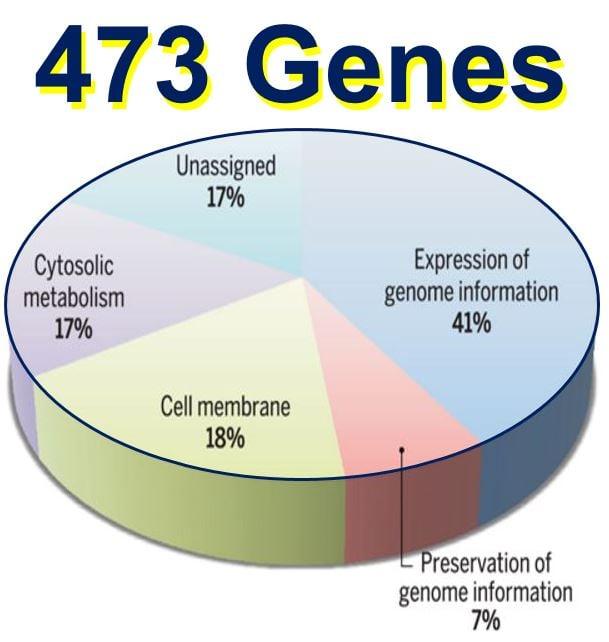 473 genes in one organism