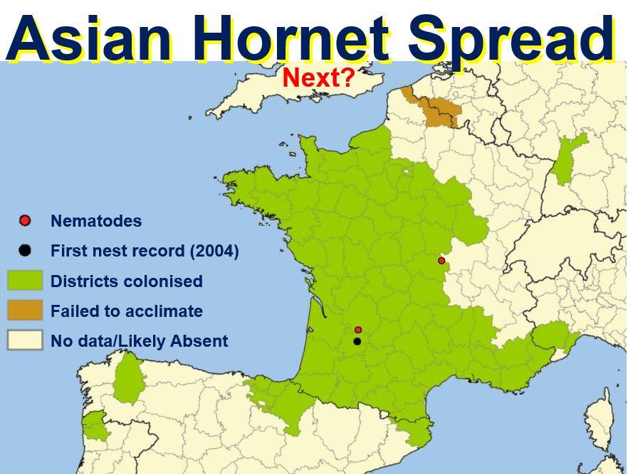 Asian Hornet Spread