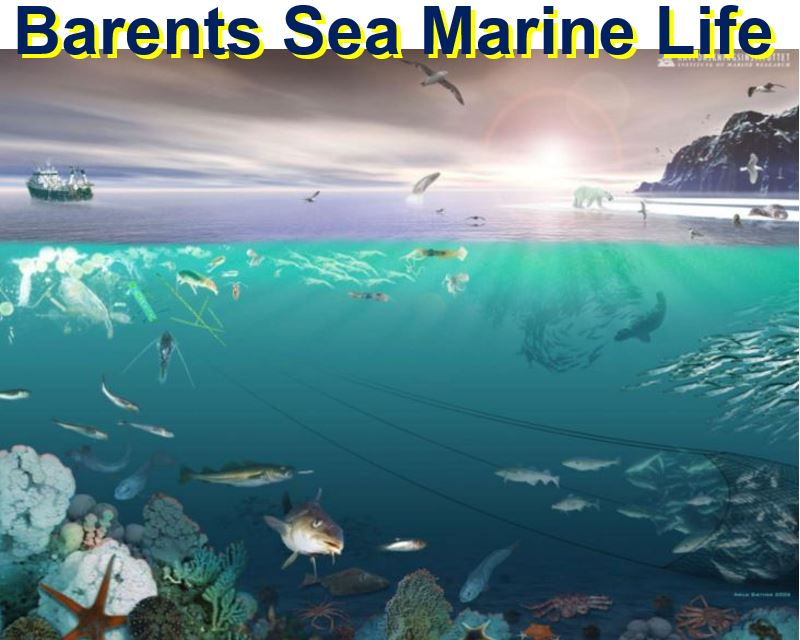 Barents Sea Marine Life