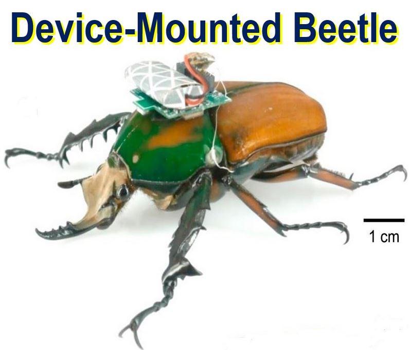 Device Mounted Beetle