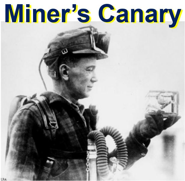 Miners Canary