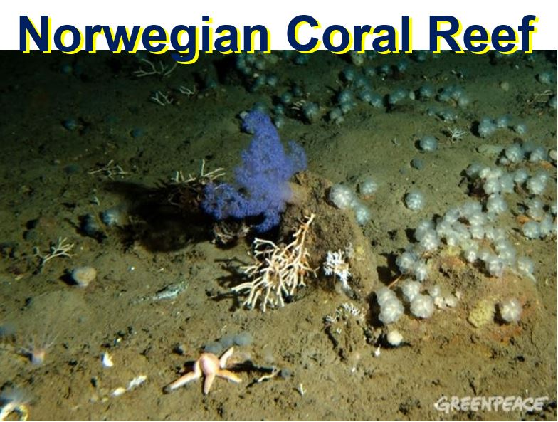 Norwegian coral reef
