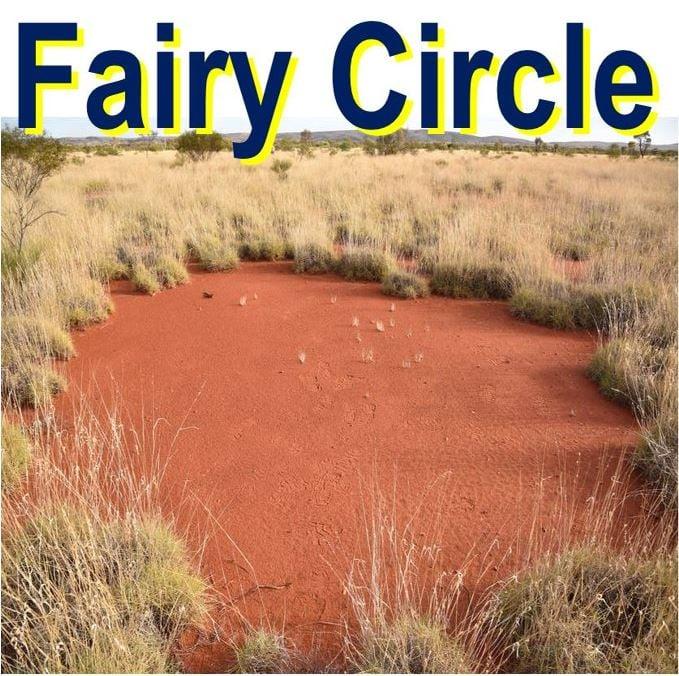 One of many fairy circles