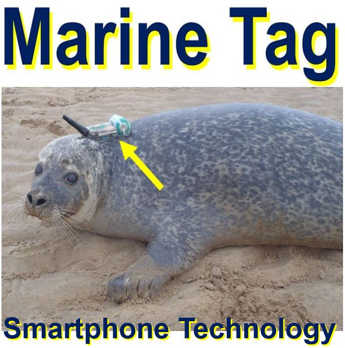 Smartphone technology to monitor harbour seal