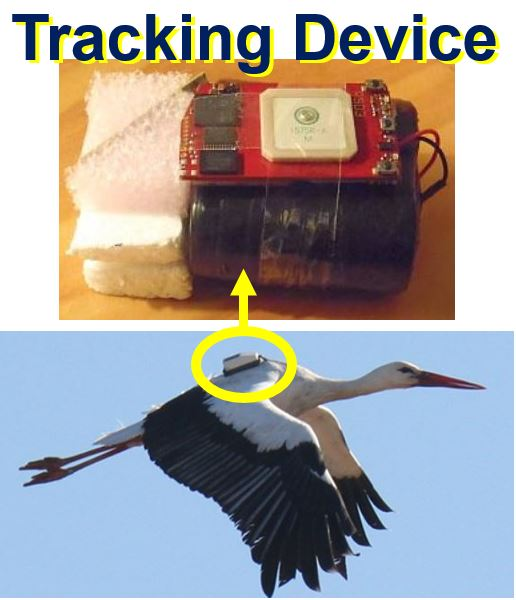 Tracking device for white storks